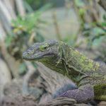 gecko-590367_1920