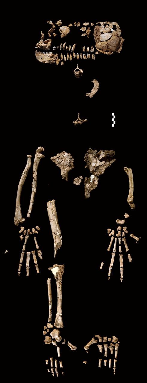 Dating menselijke fossielen