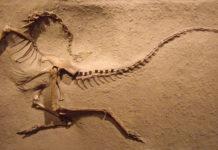 dinosaurus zachte weefsel Carbon dating 100 gratis online dating Cape Town