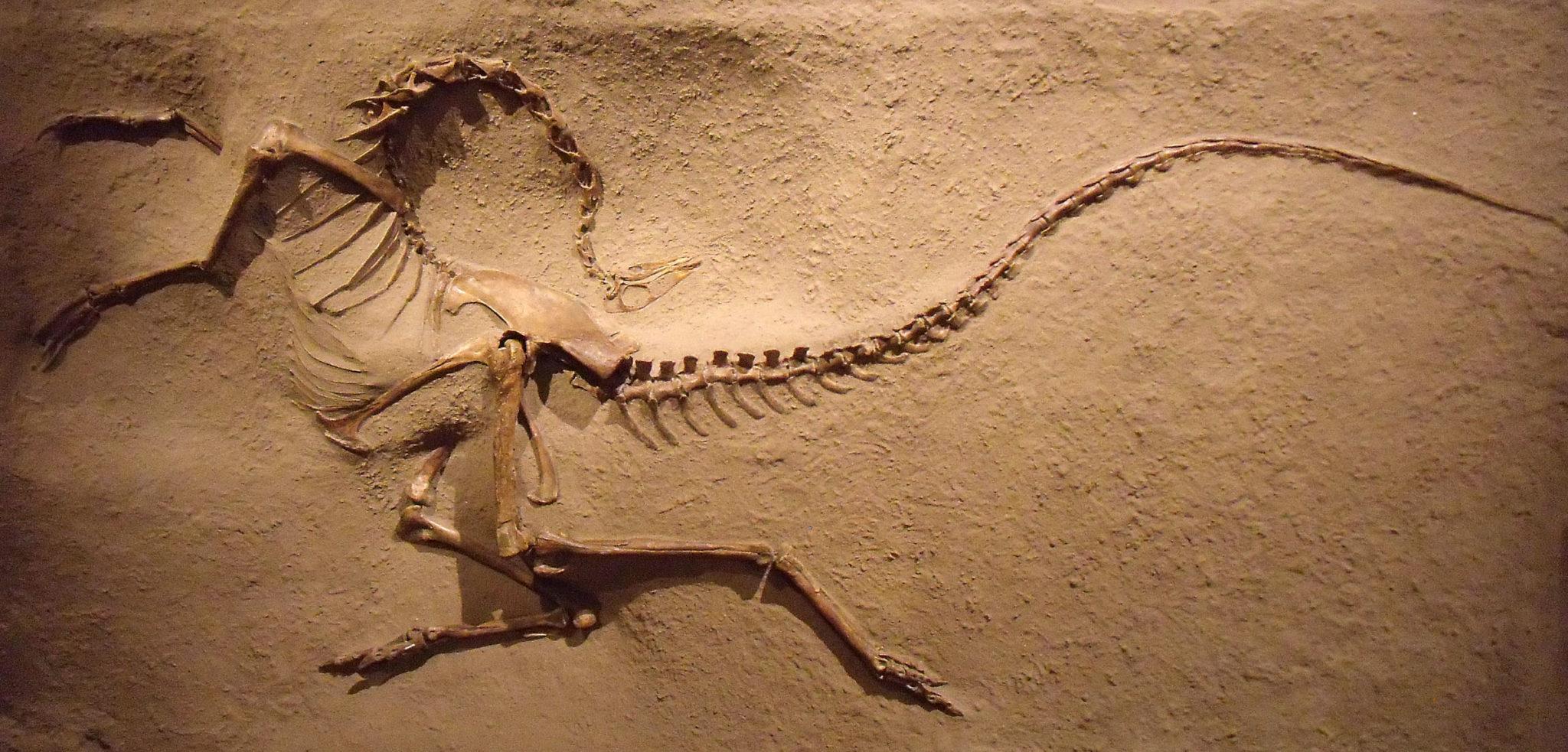 Dating dinosaurussen fossielen voor gratis online dating