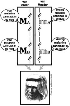 Melanine Medium
