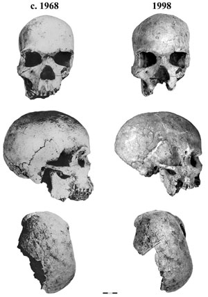 De Hofmeyr schedel. foto www.sciencemag.org