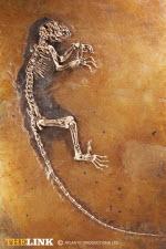 Ida fossiel