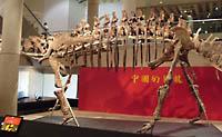Sauropod lichaam
